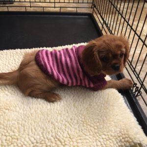 raynasweater2016